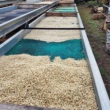 getrocknete Kaffeebohnen